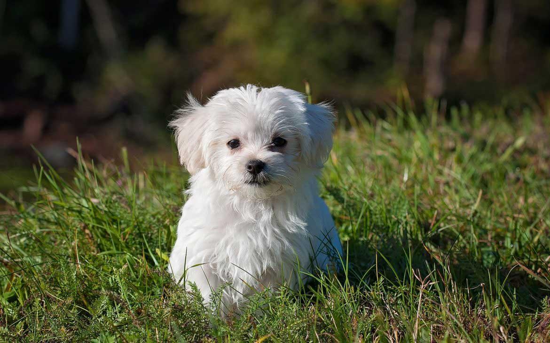 Conseils pour le dressage des chiens 7