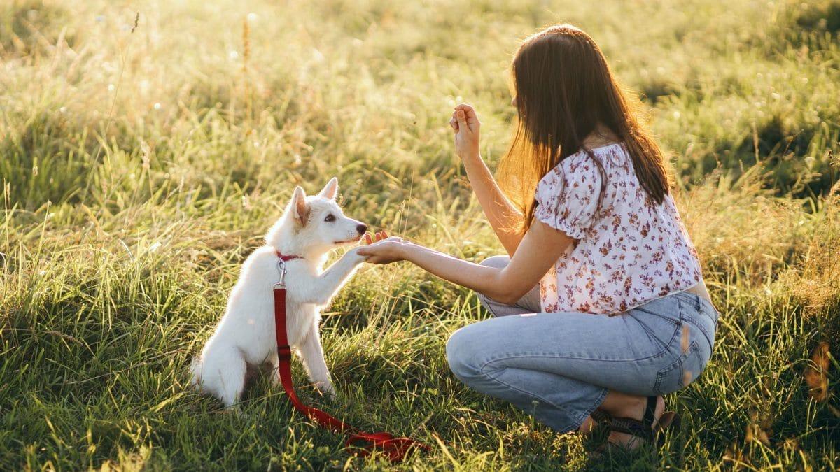 5 erreurs courantes à éviter lors du dressage de votre chien
